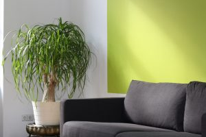 Verf-trends voor je huiskamer